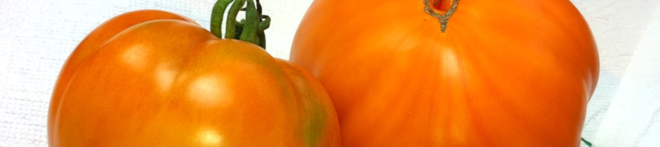 Tomaten und Weltraum